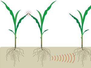 Khả năng giao tiếp của thực vật