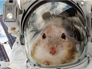 Tìm cách sống sót trên sao Hỏa nhờ chuột thí nghiệm