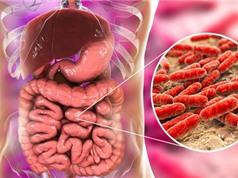 Uống bổ sung lợi khuẩn có thể giúp xương chắc khỏe