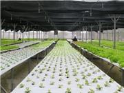 Xây dựng nông trường nông nghiệp công nghệ cao ở ngoại ô Đà Lạt