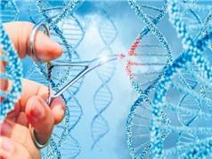 Phát hiện có 40 gien chịu trách nhiệm về hành vi hung hãn