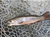 35% số cá đánh bắt trên thế giới không có cơ hội lên bàn ăn