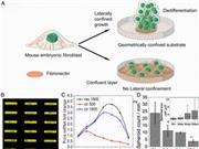 Phát triển được phương pháp thu nhận các tế bào gốc an toàn