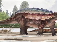 Phát hiện loài khủng long bọc giáp mới ở Mỹ