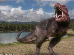 Phát hiện bằng chứng mới về sự tiến hóa của loài khủng long