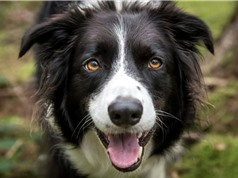 Nuôi chó có tốt cho sức khỏe?