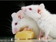 Phần mềm dự đoán độc tính chính xác tương đương thử nghiệm trên động vật