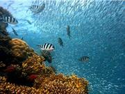 Mức độ axit đại dương có thế đạt mức cao nhất trong 14 triệu năm