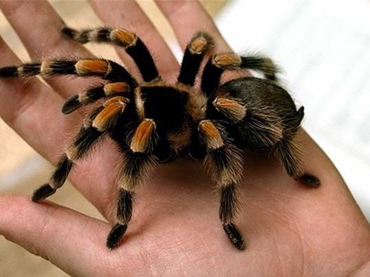 Peptit trong nọc nhện giúp chữa chứng động kinh ở trẻ em