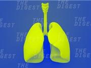 Cấy ghép thành công phổi sinh học trên lợn