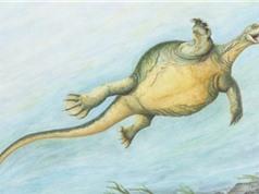 Phát hiện hóa thạch tổ tiên của loài rùa