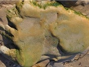 Lần đầu tiên phát hiện dấu chân khủng long trên đất liền Scotland