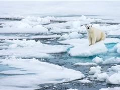 Cảnh báo: Khối băng dày và lâu đời nhất tại Bắc Cực đã bắt đầu tan chảy