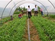 Quảng Bình: Sản xuất rau hữu cơ và giải pháp sử dụng đạm thực vật thay thế đạm vô cơ trong sản xuất rau