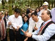 Khánh thành Trung tâm Quốc gia nghiên cứu và phát triển sâm Ngọc Linh