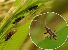 Biến đổi khí hậu khiến côn trùng phá hoại mùa màng nhiều hơn
