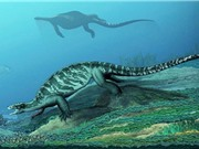 Phát hiện hóa thạch rùa cổ đại không có mai