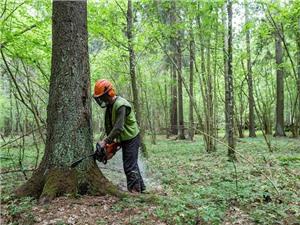 Chiến lược năng lượng tái tạo của châu Âu làm tăng tình trạng phá rừng