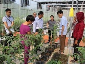Bắc Kạn: Dự án ứng dụng công nghệ cao trong sản xuất rau