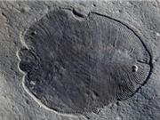 Phát hiện hóa thạch động vật lâu đời nhất thế giới