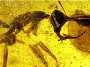 Phát hiện 'kiến địa ngục' thời tiền sử: Hàm lớn và sừng gia cố kim loại