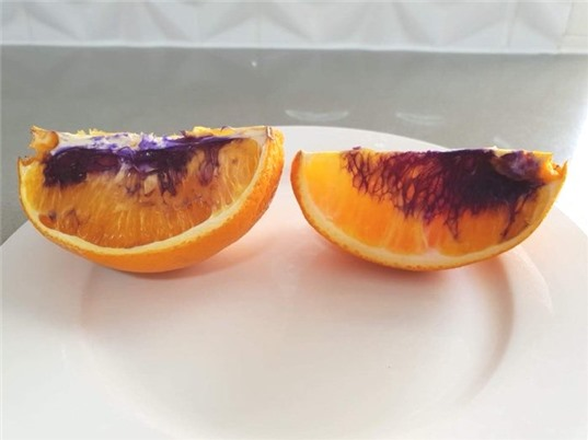 Hiện tượng quả cam chuyển sang màu tím đã có lời giải