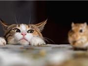 Mèo đã được chứng minh không phải là sát thủ diệt chuột