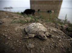 Trái Đất nóng lên khiến Trung Quốc thiệt hại nặng nề về kinh tế
