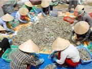 Phụ phẩm tôm - mắt xích quan trọng nâng cao giá trị ngành tôm