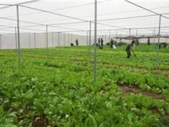 Phú Thọ ứng dụng công nghệ cao trong sản xuất nông nghiệp