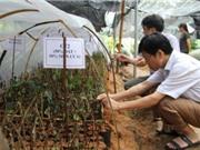 Bắc Kạn: Nghiên cứu đặc điểm sinh học và kỹ thuật gây, trồng cây chè Hoa Vàng