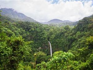Tác hại từ công tác bảo tồn rừng thứ sinh kém