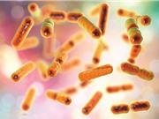 Sáng kiến bảo tồn vi khuẩn có lợi trong cơ thể người