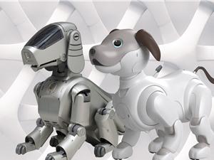 Liệu chúng ta có thể yêu quý chó robot như chó thật không?