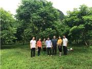 Lạng Sơn: Tuyển chọn cây Trám đen ưu tú, xây dựng mô hình nhân giống, trồng mới và thâm canh Trám đen tại huyện Hữu Lũng