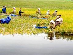 Chỉ số phát triển con người Việt Nam: Chiều hướng tăng đang chững lại