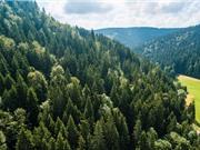 Nghiên cứu mới: Đa dạng hóa cây rừng làm tăng hấp thụ CO2