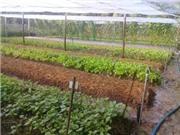 Bến Tre: Thành công trong việc ứng dụng công nghệ mới sản xuất phân hữu cơ từ nguồn phân bò sẵn có tại huyện Ba Tri