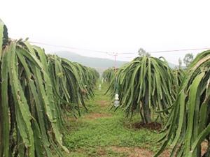 Vĩnh Phúc: Kiểm tra tiến độ thực hiện các nhiệm vụ KH&CN tại huyện Lập Thạch