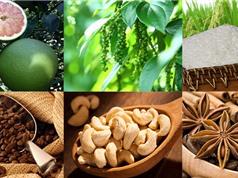 Nông sản Việt: Mất thương hiệu nếu không quan tâm đến sở hữu trí tuệ