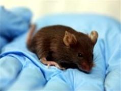 Phát hiện protein BP3 giúp điều trị các rối loạn chuyển hóa
