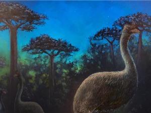 Chim voi là loài ăn đêm và bị mù