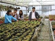 Bắc Kạn: Ứng dụng KH&CN trong phát triển một số loài lan rừng quý, có giá trị kinh tế