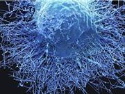 Các đột biến cúm trong tế bào hỗ trợ dự đoán khả năng đáp ứng miễn dịch