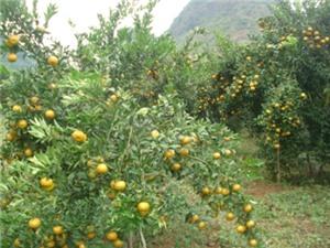 Cao Bằng: Phát triển nông sản hàng hóa trên địa bàn tỉnh gắn với thị trường trong bối cảnh hội nhập kinh tế quốc tế