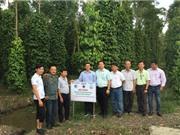 Kiên Giang: Nghiên cứu nâng cao hiệu quả trồng tiêu trên nền đất thấp và xây dựng nhãn hiệu tập thể trên địa bàn tỉnh