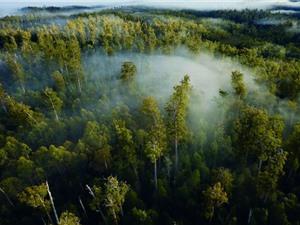 2/3 vùng hoang dã còn lại trên Trái đất nằm ở năm quốc gia
