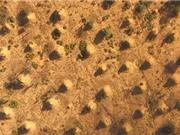 Bí ẩn những gò mối 4.000 năm tuổi ở Brazil