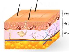 Những điều thú vị về da người