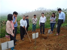 Sơn La: Kiểm tra thí nghiệm bảo quản khoai sọ mán tại huyện Vân Hồ